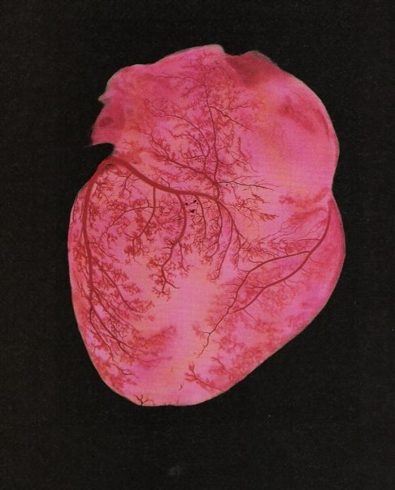 human-heart-2.jpg
